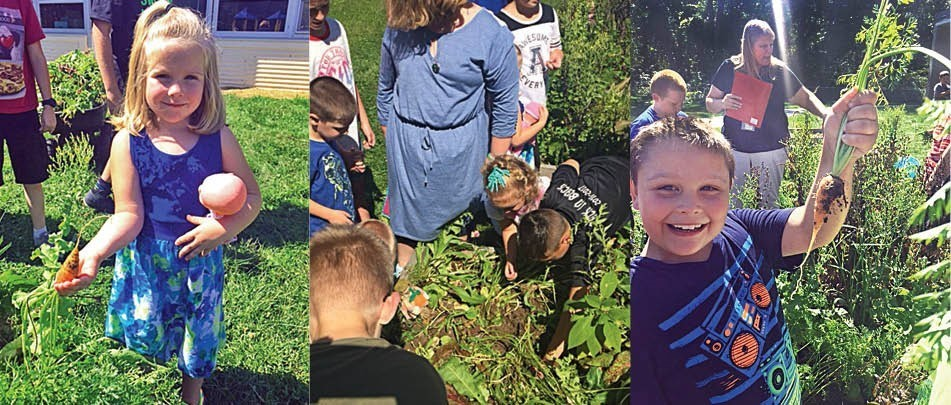 Fall harvest at Olmsted garden - a living classroom